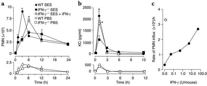 IFN-γ deficiency modulates the PMN infiltration in SES-induced peritonea...