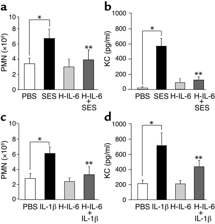 Reconstitution of IL-6/sIL-6R signaling in IFN-γ–/– mice normalizes the ...
