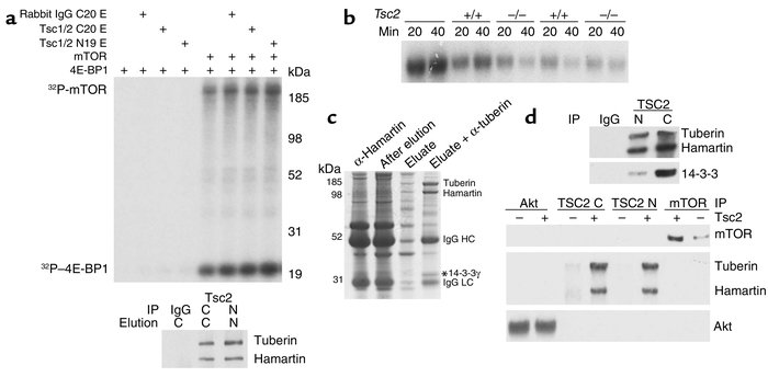 The mTOR functional analysis and purification of a Tsc1/Tsc2 complex. (a...