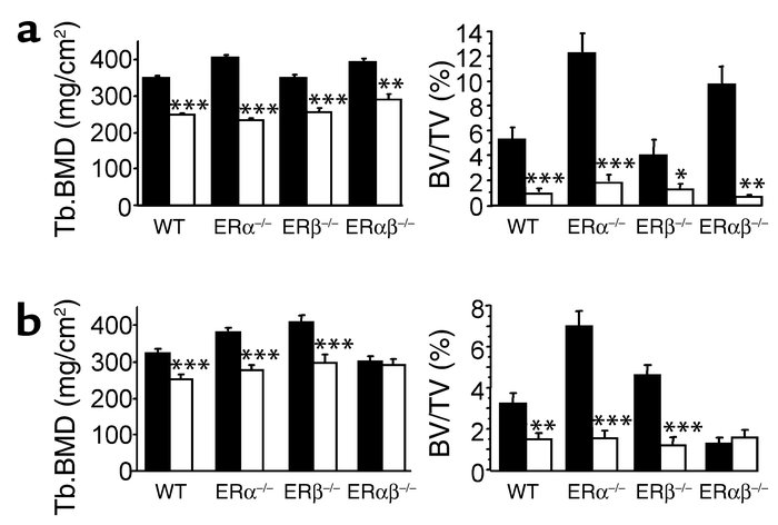 Response of WT and ER knockout mice to gonadectomy. Mice were sham-opera...