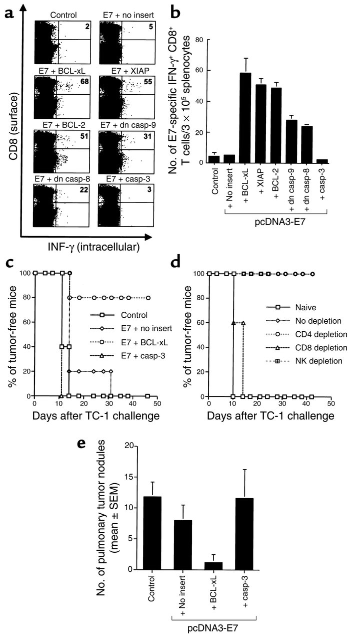 E7-specific CD8+ T cell immune responses and antitumor effect generated ...