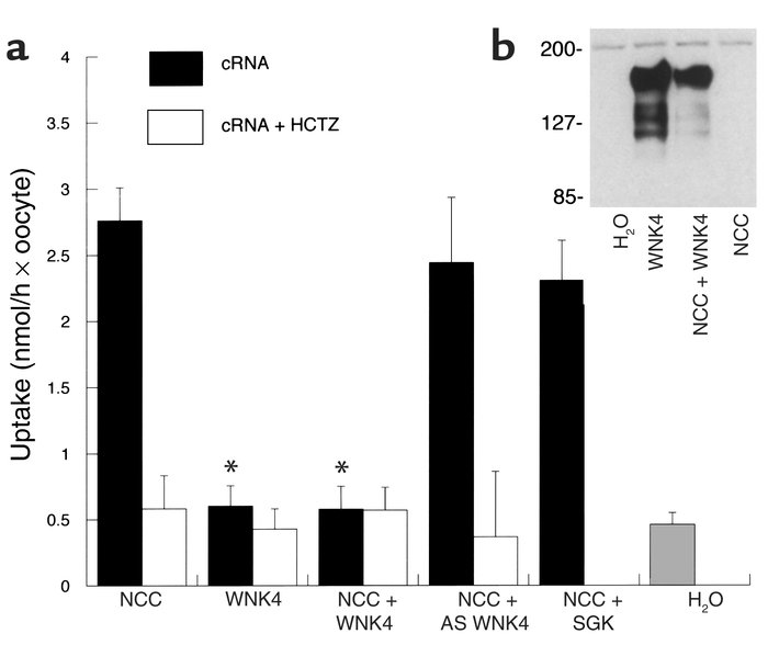 (a) Effect of WNK4 on NCC-mediated 22Na uptake, expressed as nmol/h per ...