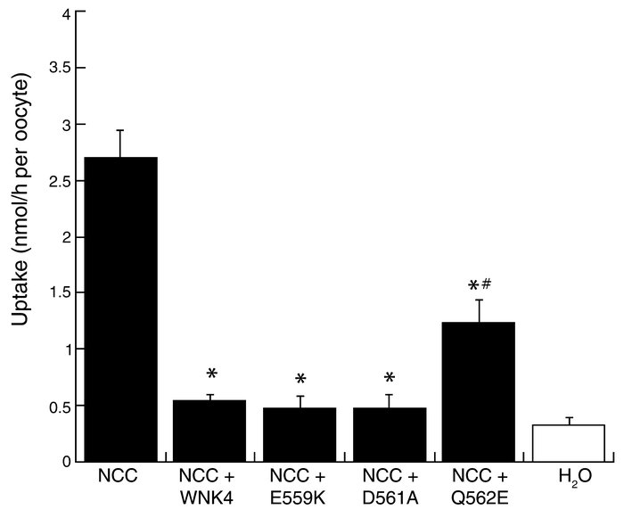 Effect of mutant WNK4 on NCC-mediated 22Na uptake, expressed as nmol/h p...