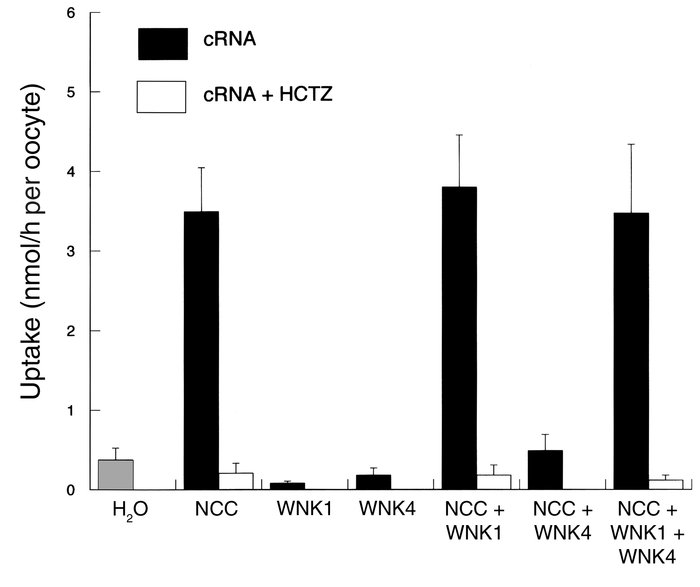 Effect of WNK1 on NCC-mediated 22Na uptake, expressed as nmol/h per oocy...