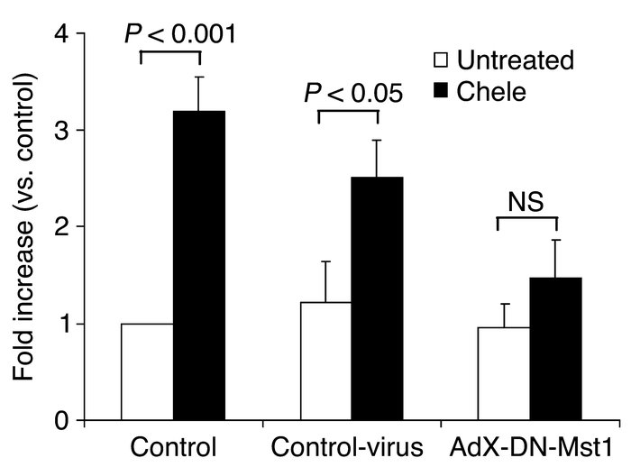 The effect of dominant-negative Mst1 upon chelerythrine-induced cardiac ...