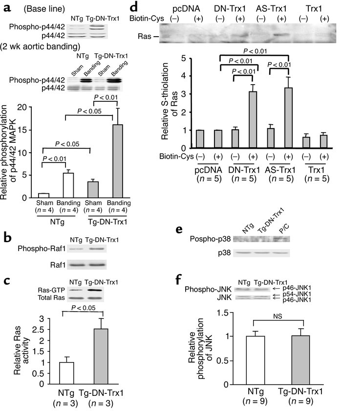 The activities of the Ras–Raf-1–ERK pathway, p38-MAPK, and p46/p54–JNK1 ...