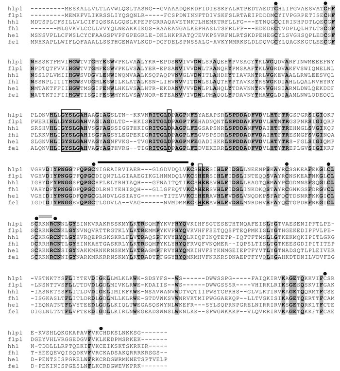 Sequence alignment of lipoprotein lipase (lpl), hepatic lipase (hl), and...