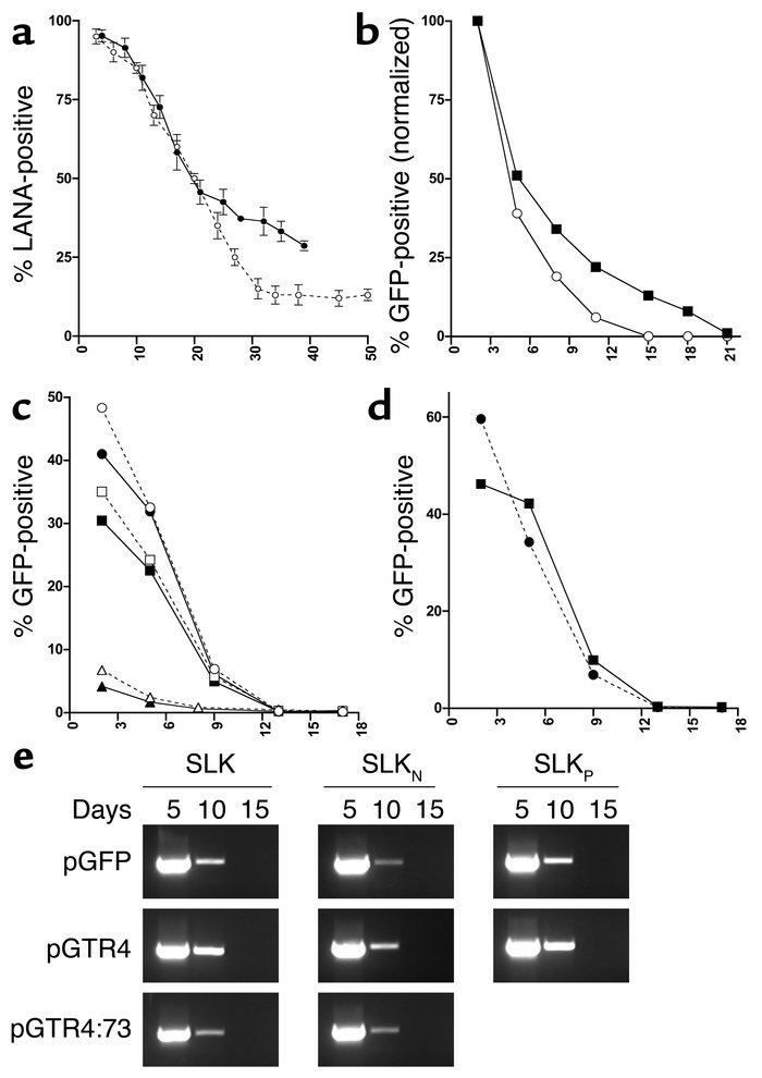 Analysis of SLKP and SLKN cells. (a) SLKN cells were infected with viral...