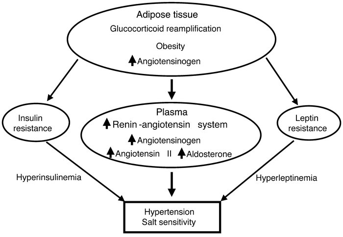 Hypothetical representation of the pathophysiology of hypertension in aP...