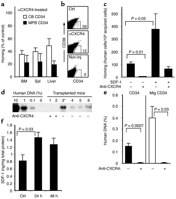 SDF-1/CXCR4 interactions mediate homing and engraftment of irradiated NO...