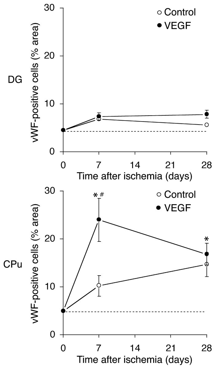 Effects of intraventricular VEGF on the number of vWF-labeled cells in D...