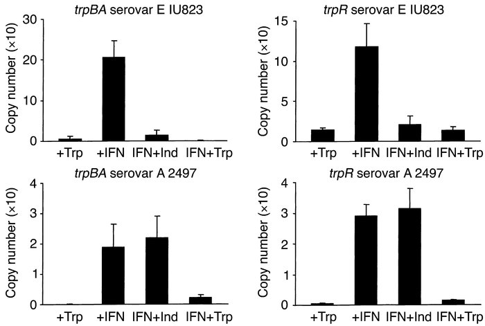 RT-PCR quantitation of trpBA and trpR mRNA isolated from HeLa cell monol...