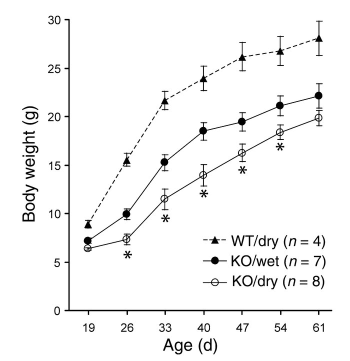 Partial rescue of the Gfra2–/– (KO) mice growth by wet-mash feeding. Gro...