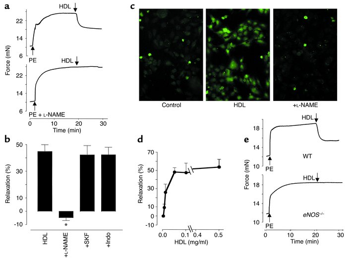 HDL induces vasodilation in aortae from rats and mice in an eNOS-depende...