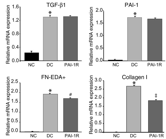 Relative glomerular mRNA expression of TGF-β1, PAI-1, fibronectin, and t...