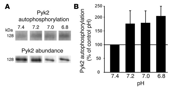 Acid induces Pyk2 autophosphorylation in a cell-free system. Wild-type O...
