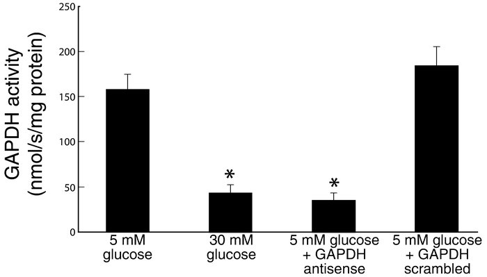 Effect of GAPDH antisense ODNs on GAPDH activity in BAECs. Each bar repr...