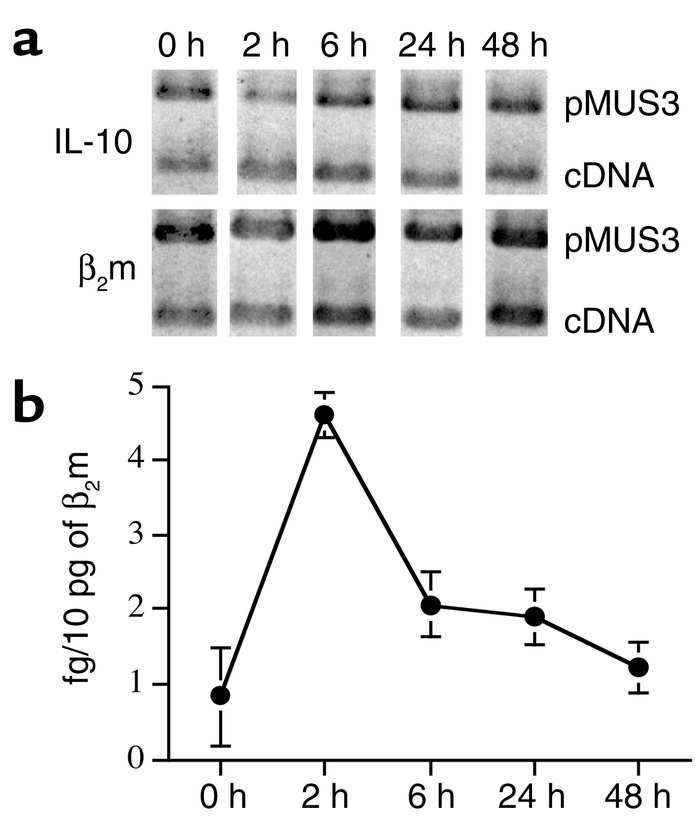 IL-10 mRNA expression in skin of C57BL/6 mice following tape stripping s...