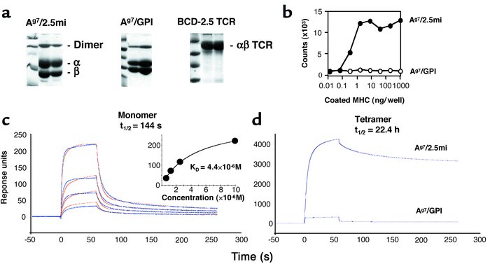 Biophysical and functional characterization of Ag7/2.5mi and Ag7/GPI MHC...
