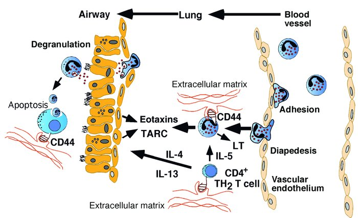 Overview of immunological mechanisms in the development of allergic eosi...
