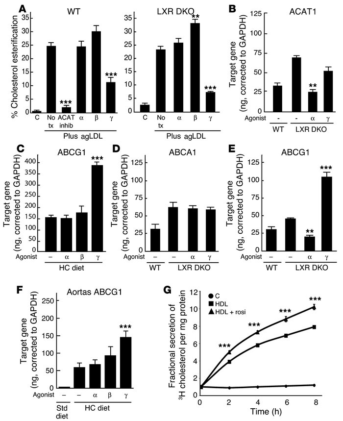 PPARγ inhibits cholesterol esterification and stimulates ABCG1 expressio...