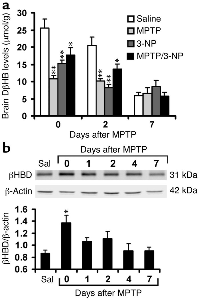 Brain levels of DβHB and β-hydroxybutyrate dehydrogenase (βHBD) under di...