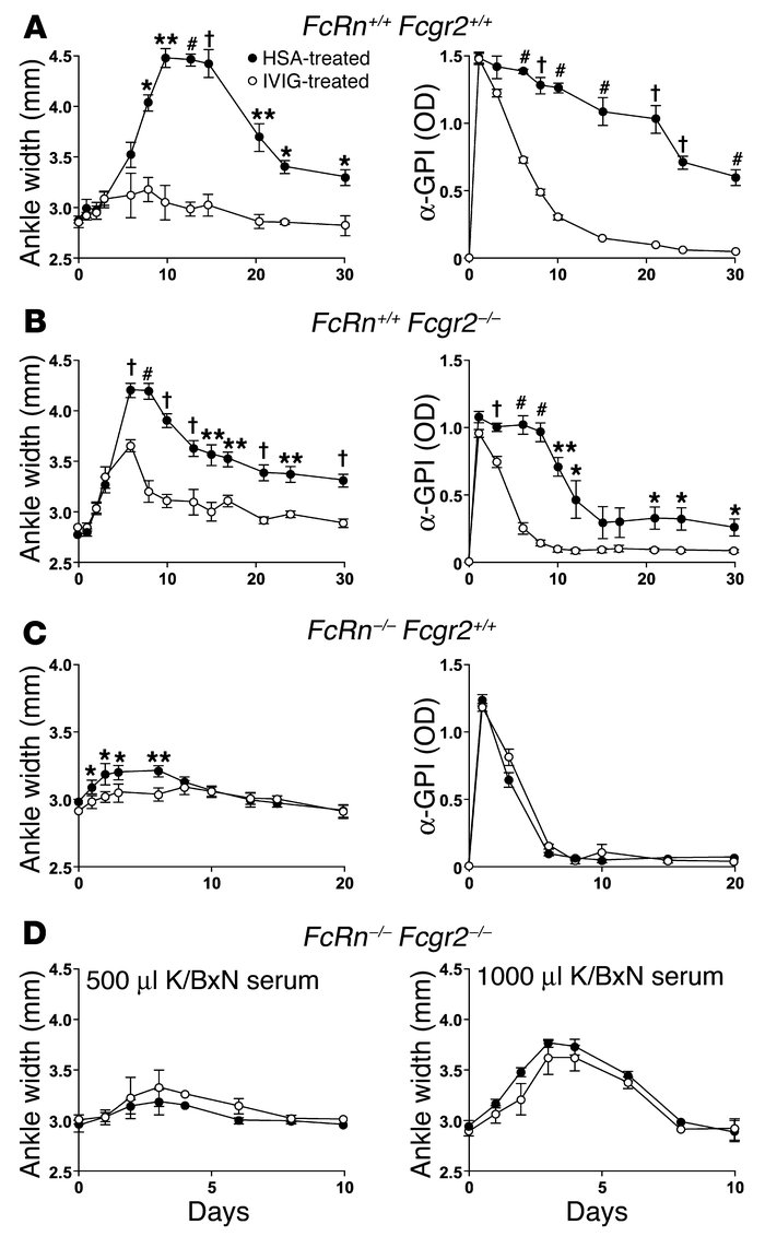Both FcRn and Fcgr2 are required for IVIg to ameliorate arthritis. Mice ...