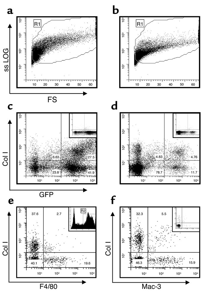 Flow-cytometric analysis of whole-lung cells from GFP BM chimera mice. W...