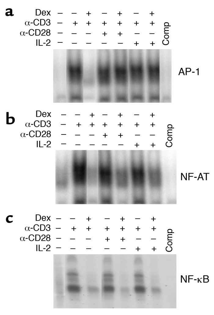 Costimulation restores the inhibition of AP-1 activation by Dex. Nuclear...