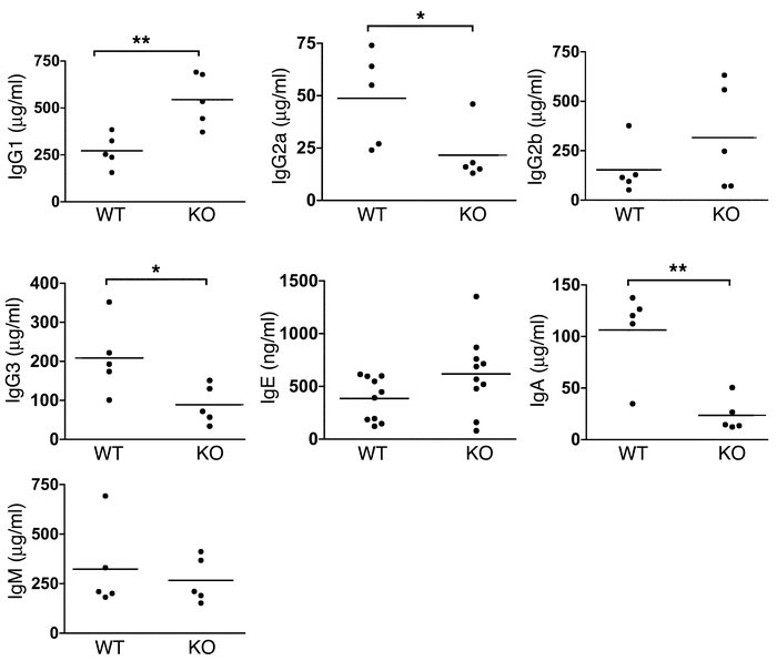 Baseline levels of serum immunoglobulin isotypes in C3aR–/– and WT litte...