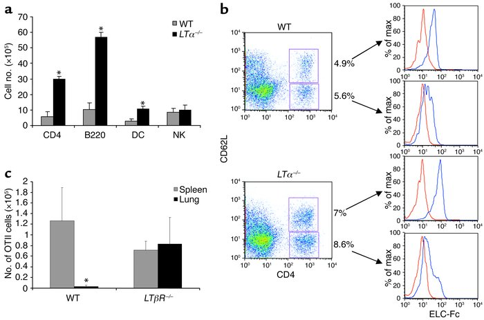 Leukocyte accumulation in lungs of LT-deficient mice. (a) Increased numb...