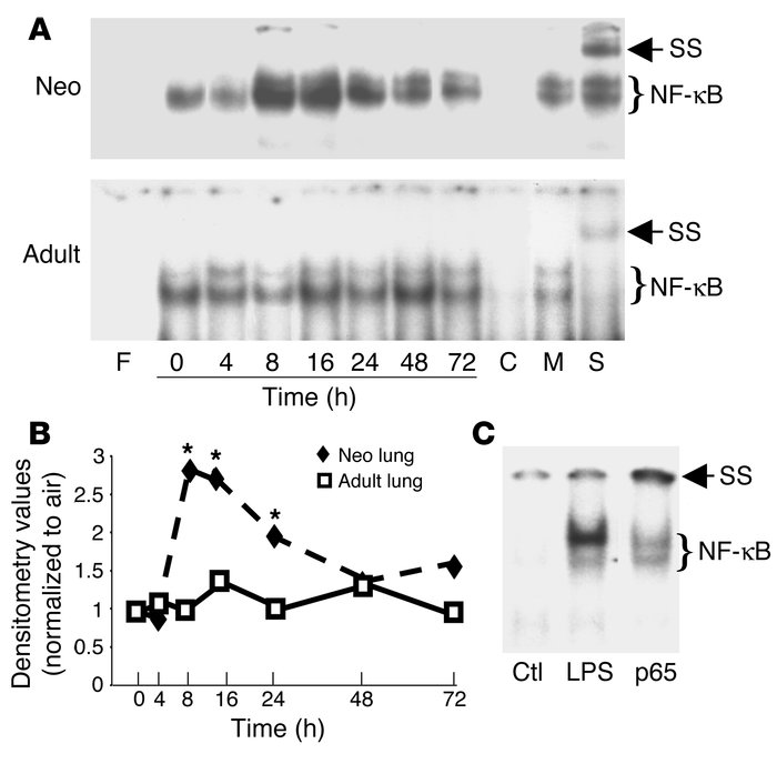 Demonstration of hyperoxia-mediated neonatal (Neo) lung NF-κB activation...