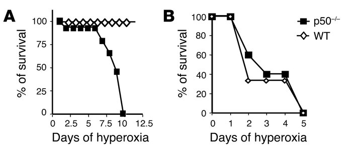 Survival of neonatal WT (A) and p50–/– (B) mice after chronic hyperoxia....