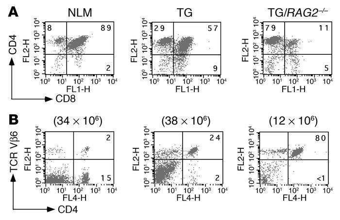 Flow cytometry analysis of thymocytes and peripheral T cells in 5B6 tran...
