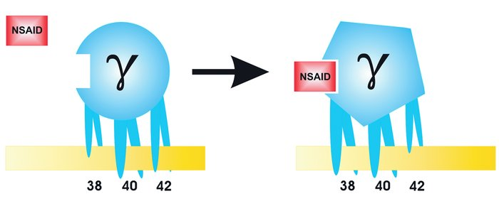Model of how certain NSAIDs decrease Aβ42 production. NSAIDs may directl...