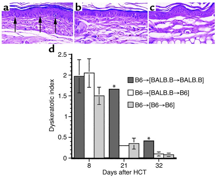 Reduced epithelial injury over time in [BALB.B→B6] chimeric recipients. ...