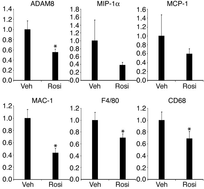 The expression of ADAM8, MIP-1α, MCP-1, MAC-1, F4/80, and CD68 in ob/ob ...