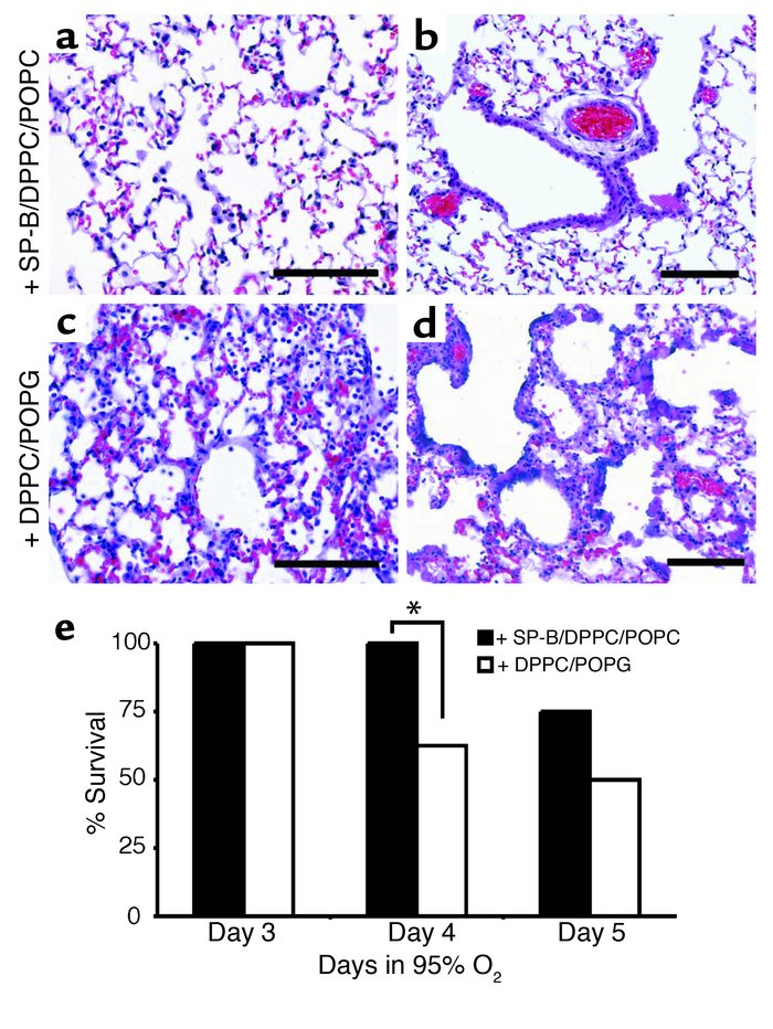 Exogenous SP-B protects Stat-3Δ/Δ mice during hyperoxia. (a) Lung morpho...