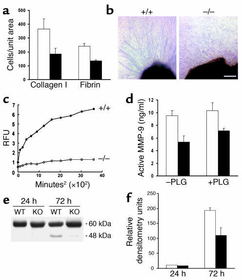 Endothelial cell function. (a) VEGF-A-directed migration of wild-type (w...