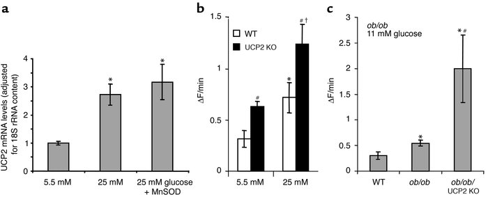 UCP2 expression and mitochondrial superoxide production in islets and di...