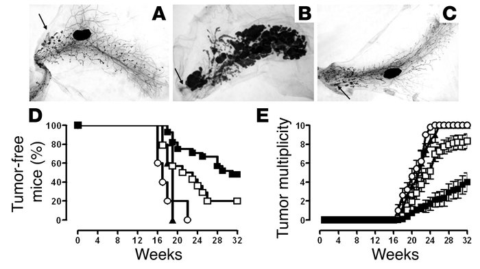 Effects of TM-ECD vaccination and p185neu/alloq-IFNγ cells boost on the ...