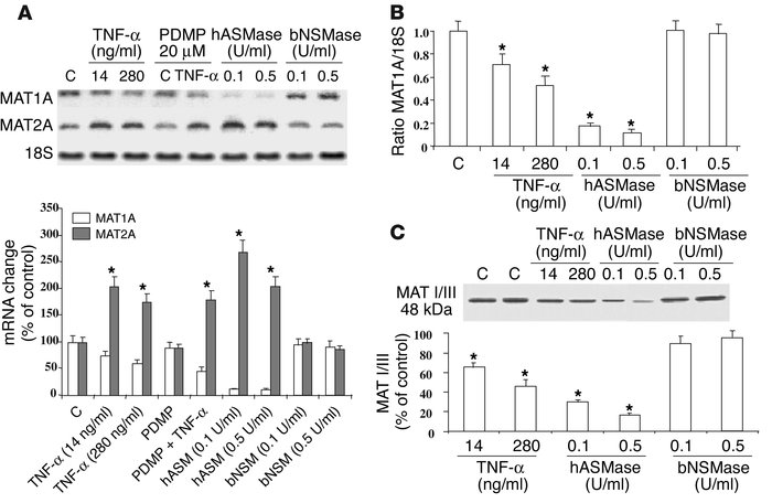 Regulation of MAT1A by SMases. (A) Cultured rat hepatocytes were treated...