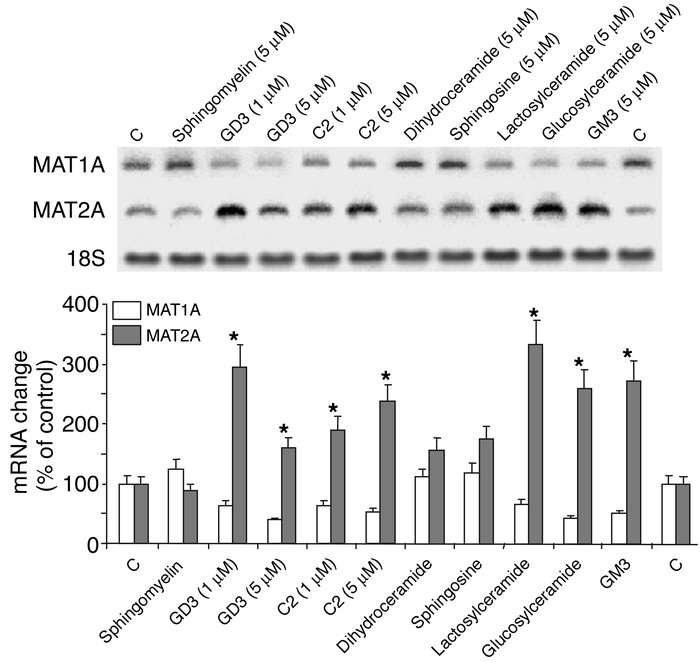 Regulation of MAT1A by sphingolipids. Cultured rat hepatocytes were incu...