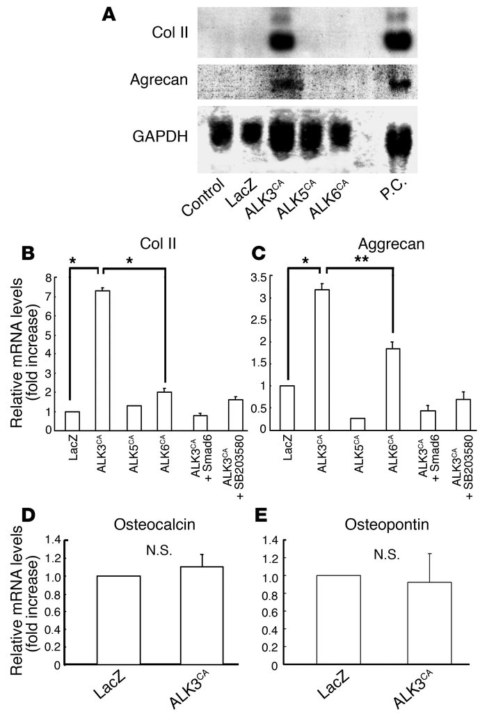 Effects of ALK3CA, ALK5CA, and ALK6CA expression on chondrocyte-specific...