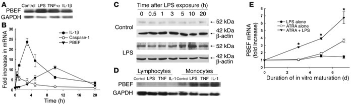 PBEF is expressed in neutrophils and monocytes exposed to inflammatory s...