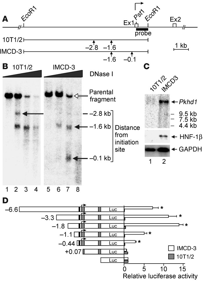 DNase hypersensitive site mapping and deletion analysis of the mouse Pkh...