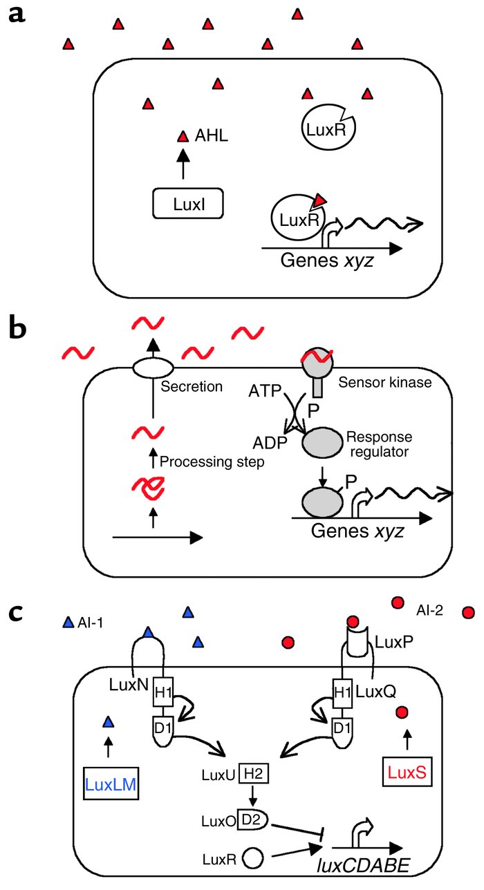 Three canonical quorum-sensing circuits in bacteria. (a) In Gram-negativ...