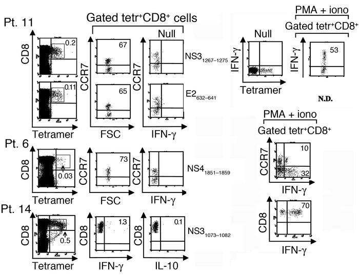 Inefficient effector capacity of peripheral virus-specific CD8+ T cells ...