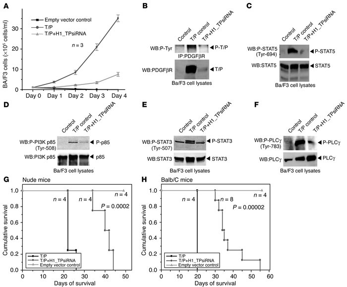 Stable siRNA expression inhibits TEL-PDGFβR in vitro and in vivo. (A) Te...