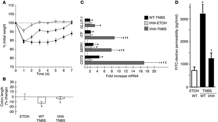 Conditional deletion of epithelial Vhlh protects from experimental colit...